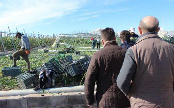 Sánchez Haro visita las zonas de invernadero afectadas por el tornado en Almería y transmite su apoyo a los agricultores