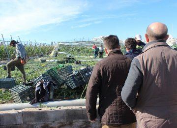 Hacienda ignora al sector hortícola almeriense y lo deja fuera de la rebaja fiscal