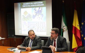 Las exportaciones de aceite de oliva y aceituna hasta octubre superan los 2.900 millones de euros, más que en todo 2016