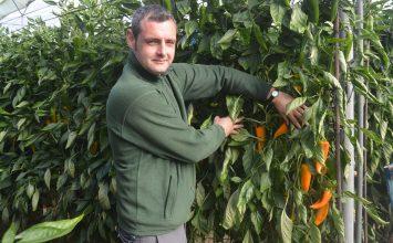 Un 'toque' catalán en un invernadero de El Ejido