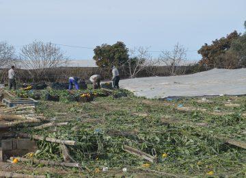Cajamar comienza a  pagar las indemnizaciones por los tornados a los productores con seguro