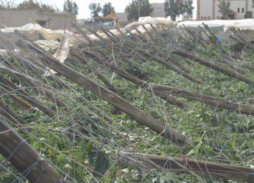 Líneas de financiación preconcedidas de Unicaja Banco para los agricultores afectados por el tornado
