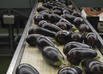 Los precios de las frutas y hortalizas se recuperan en la segunda semana de enero