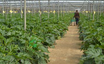 La propuesta de la PAC da continuidad al régimen específico de frutas y hortalizas