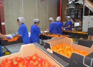 El valor de los productos hortofrutícolas exportados crece casi un 12% en Almería