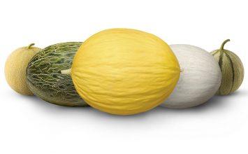 Fitó lanza Foodture en Fruit Logística, un concepto innovador pensado para el consumidor del futuro