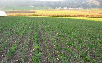 La tierra cultivada en España es insuficiente para abastecer el consumo del país