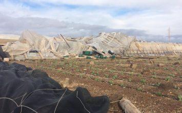 La Mojonera cifra en 40 hectáreas el alcance de daños en invernaderos del municipio