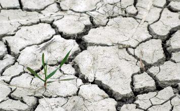 Las indemnizaciones del seguro agrario por sequía en el cereal superarán los 100 millones de euros esta campaña