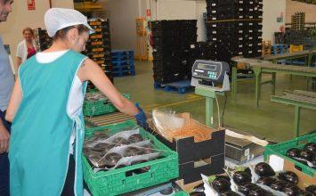Las ventas agroalimentarias almerienses al exterior aumentan un 5,6%