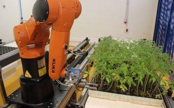 Tecnova presenta el primer robot capaz de  realizar injertos de plántulas hortícolas