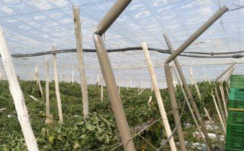 El viento daña cubiertas de explotaciones agrícolas en la provincia de Almería