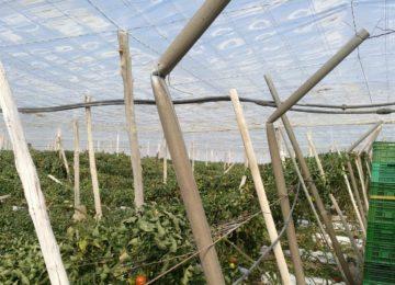 La Junta respalda los seguros agrarios en 2018 con ayudas por valor de 8,8 millones de euros, un 63% más que en 2017
