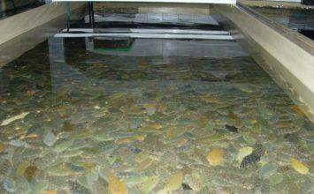 La acuicultura andaluza generó en 2017 casi mil puestos de trabajo, un 21% más que el año anterior