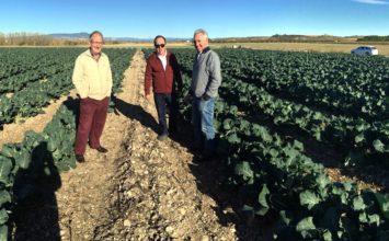 FMC Agricultural Solutions obtiene varias autorizaciones excepcionales de sus insecticidas a base de Cyazypyr®