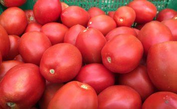 La empresa Ecoculture soluciona los problemas del jaspeado del tomate