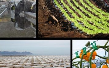 Hasta 300 euros de premio para la foto que mejor refleje el trabajo de los ingenieros agrícolas en Almería