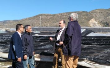 Las primeras estimaciones de daños por el granizo de ayer cifran en 15 las hectáreas afectadas en La Mojonera