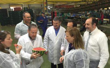 Agricultura intensifica los controles sobre la madurez en sandía y melón en Almería