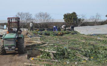 Agricultura sube hasta casi los 10 millones de euros para bonificar el seguro agrario