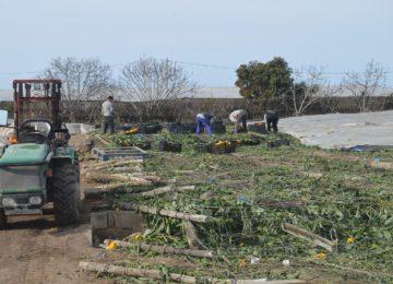 El Gobierno aprueba el XL Plan de Seguros Agrarios Combinados