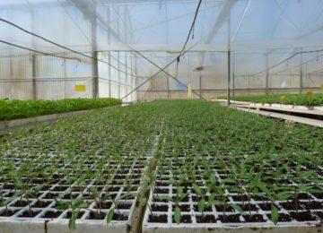 Projar elabora sustratos para semilleros a medida de cultivos, climas y tecnologías de producción