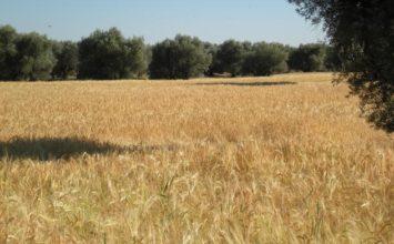 La tributación por módulos es un sistema eficaz y  transparente para el sector agrario