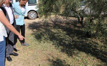 Sánchez Haro visita en Alcaudete explotaciones afectadas por el granizo y recuerda la importancia de asegurar las producciones