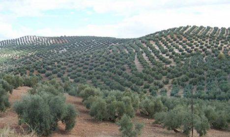 Más cerca del almacenamiento privado del aceite de oliva