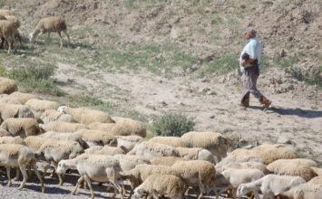 Luis Planas subraya la necesidad de lograr la plena igualdad entre la sociedad rural y la urbana