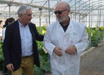 Autorizada una encomienda al Ifapa para  la identificación de nuevas variedades de fresa