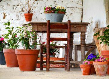 ¿Cómo cuidar las plantas en maceta?