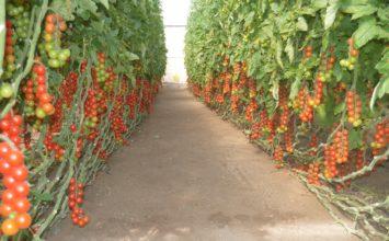 Ingenieros agrícolas reclaman cambios legales para garantizar la seguridad alimentaria