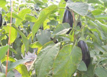 El frío y el arranque de cultivos regulan la producción y generan una subida de precios