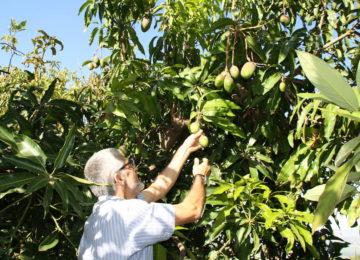 La agroecología, una incipiente vertiente de la agricultura ecológica