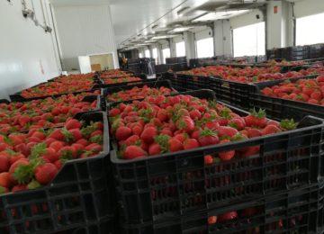 Vellsam continúa con su expansión nacional a través de los siete mayores distribuidores de Huelva