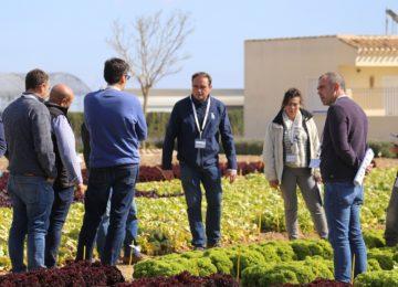 Bejo presenta sus novedades en variedades de lechuga, brassica y otros cultivos
