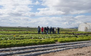 Bejo celebra una jornada de puertas abiertas de lechuga, brassica y otros cultivos