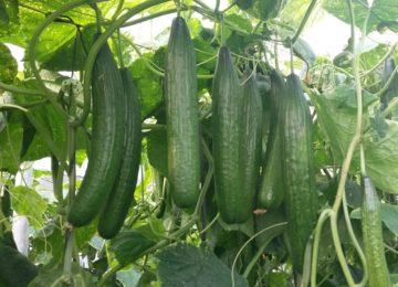Ecoculture muestra los avances de sus productos para hortícolas y tropicales de la Costa de Granada