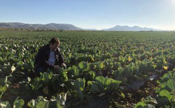 El consumidor del futuro sólo demandará fruta y verdura ecológica