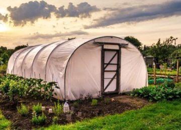 Las ventajas del cultivo en invernaderos