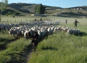 Savia pide medidas en defensa de la ganadería extensiva y la trashumancia a la Consejería