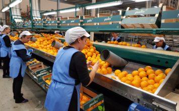 El enorme esfuerzo de las cooperativas agroalimentarias para garantizar el suministro de alimentos