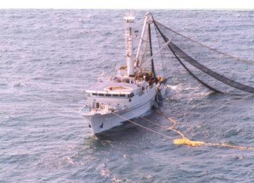 """Clara Aguilera: """"El Mediterráneo occidental contará con su primer Plan de Gestión de pesca"""""""