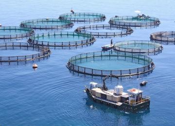 """Clara Aguilera: """"La acuicultura debe convertirse en una prioridad política para la UE"""""""