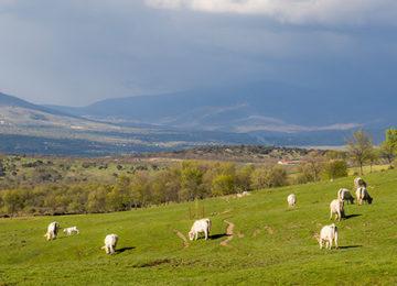 La adaptación de la agricultura española frente al cambio climático, ejemplo para Europa