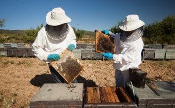 La Junta abona 6,7 millones en ayudas para apicultura y mantenimiento de razas autóctonas de la campaña 2018