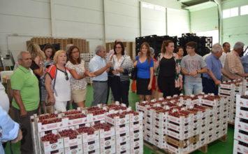 Maitena del Genil inaugura la campaña de su cereza güejareña que impulsa en el mercado internacional