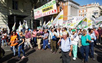 Más de 1.200 cooperativistas granadinos participan en la manifestación por el aceite de oliva en Madrid