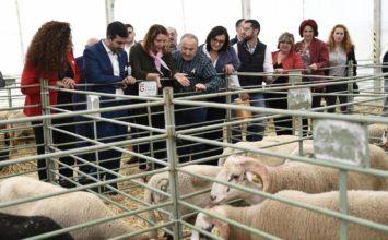 Crespo anuncia el abono de casi 825 millones del anticipo de las ayudas directas de la Política Agrícola Común 2019